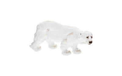 Eisbär bunt staffiert